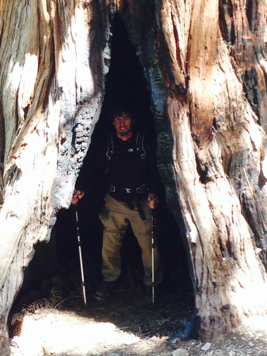 Sheriff in a tree.