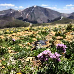 flowers and San Luis Peak.  A nice little walk up.